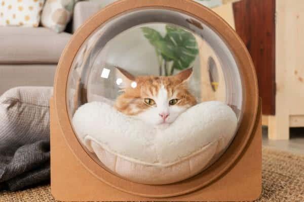 Niche pour chat alpha spaceship