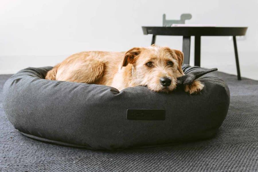 panier design pour chien rondo