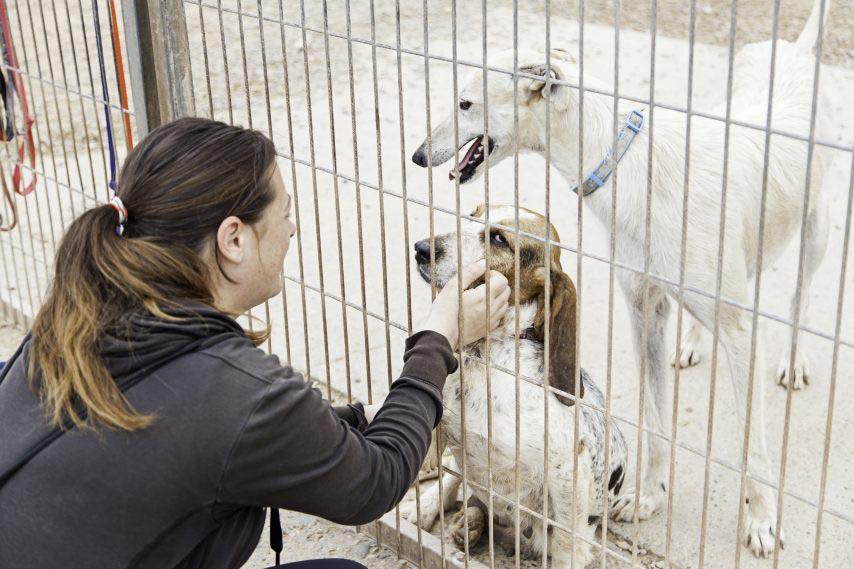 Dons protection animal spa