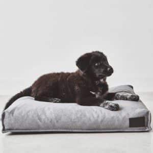 Coussin pour chien design – DIVO