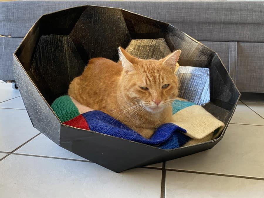 panier pour chien chat design en carton