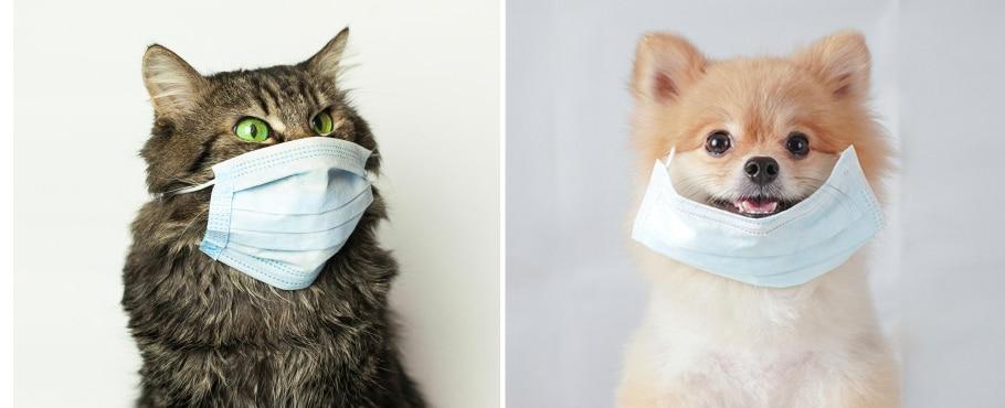 dog and cat design livraison covid
