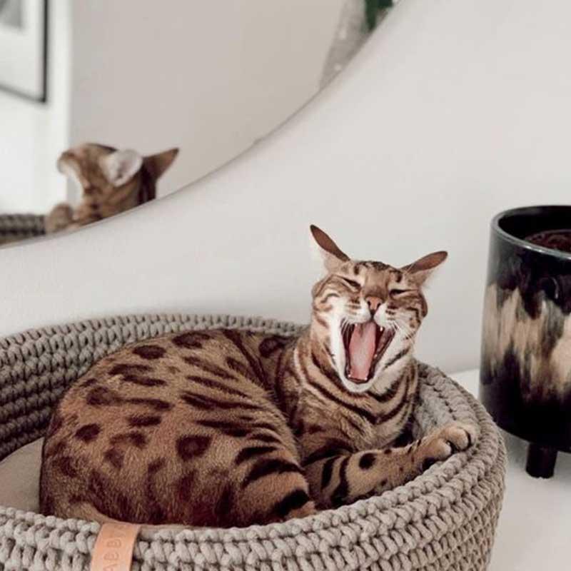 Panier design pour chat et chien COCO