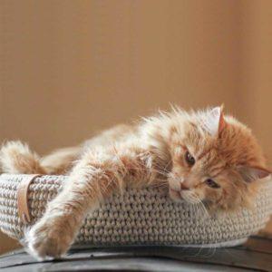 Panier design pour chat et petit chien – COCO