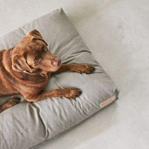 Coussin pour chien design éco-responsable – MARE