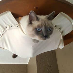 Hamac de plafond pour chat – SIMBA