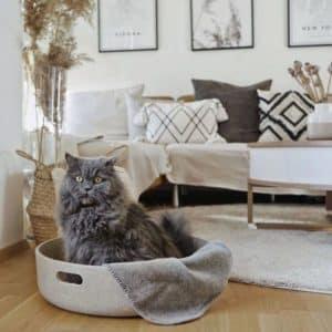 Panier pour chat Design – CESTO